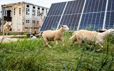 Silicon Ranch Launches Regenerative Energy™